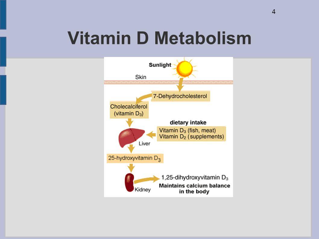 4 Vitamin D Metabolism