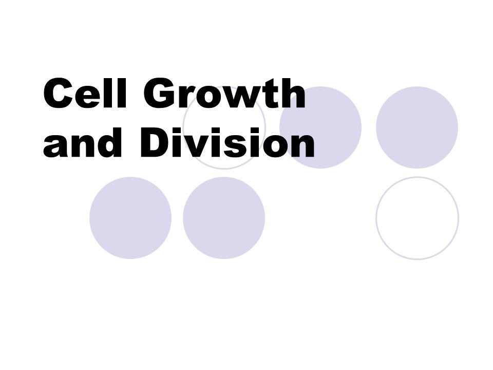 Mitosis (4 phases) 1.Prophase 2.Metaphase 3.Anaphase 4.Telophase