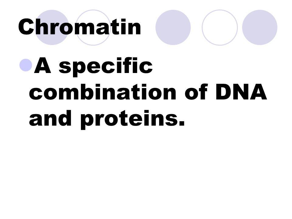 Chromosomes Highly organized segments of genetic information. Made up of chromatin.