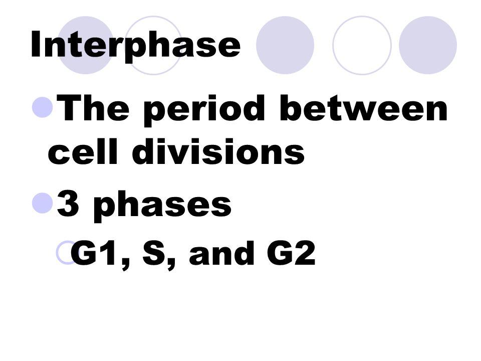 Mitosis Cytokinesis Interphase