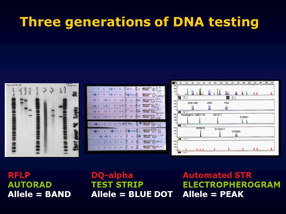 Three generations of DNA testing DQ-alpha TEST STRIP Allele = BLUE DOT RFLP AUTORAD Allele = BAND Automated STR ELECTROPHEROGRAM Allele = PEAK