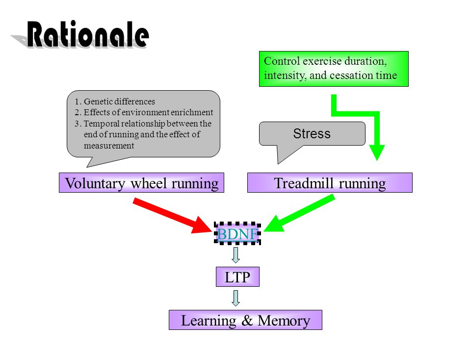 BDNF LTP Learning & Memory Voluntary wheel runningTreadmill running 1.