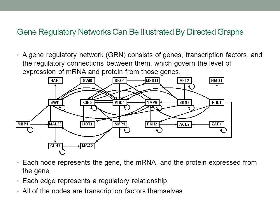 GRNmap: Gene Regulatory Network Modeling and Parameter Estimation Matlab application written by Katrina Sherbina.
