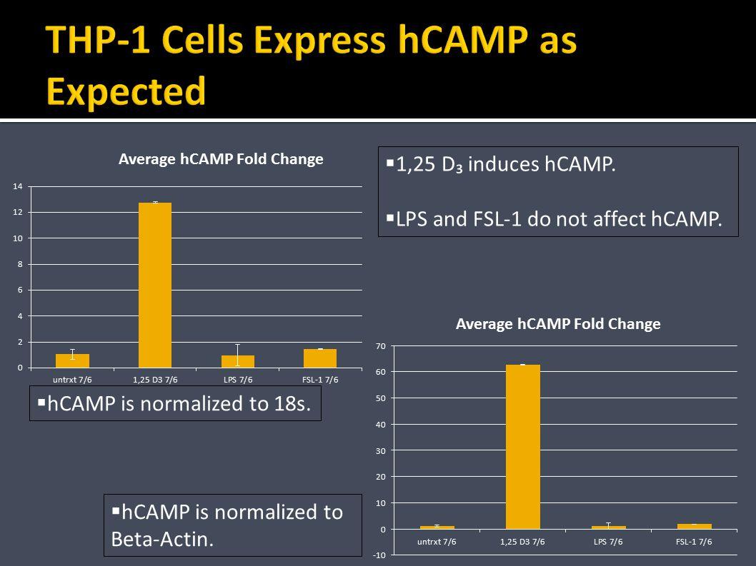 No mCAMP expression observed.