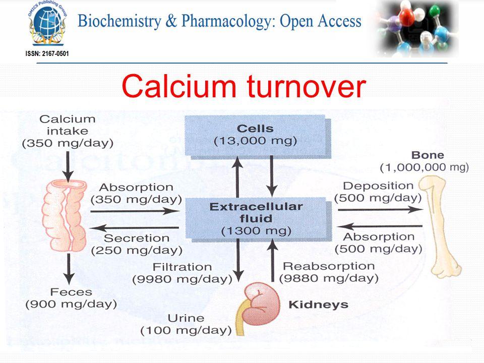 Calcium turnover