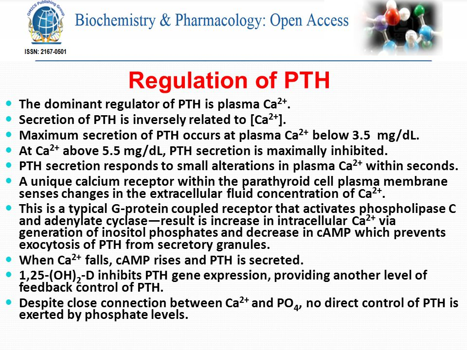 Regulation of PTH The dominant regulator of PTH is plasma Ca 2+.