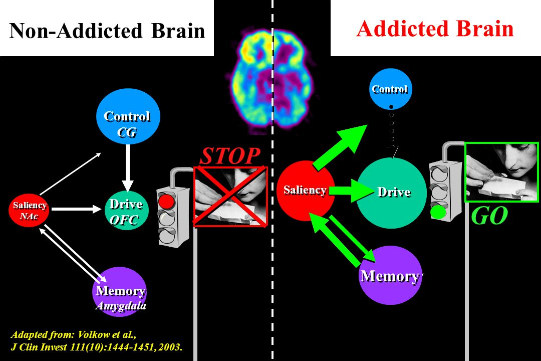 Drive OFC Drive OFC Saliency NAc Saliency NAc Memory Amygdala Memory Amygdala Control CG Control CG Non-Addicted Brain Addicted Brain STOP GO Drive Me