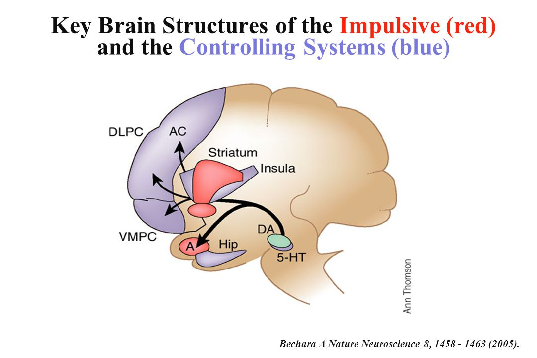 Alcohol decreased activity of areas involved with control and increased activity of areas involved with impulsivity Decreases prefrontal cortex cingulate gyrus Increases Amygdala, NAcc Zhu et al., Alcohol Alcohol 39: 53-58 2004.