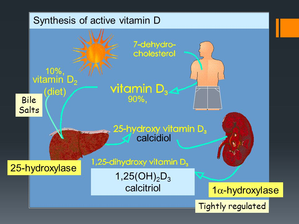 vitamin D 2 (diet) 1,25(OH) 2 D 3 calcitriol Synthesis of active vitamin D 10%, 90%, Bile Salts Tightly regulated 25-hydroxylase 1  -hydroxylase calcidiol