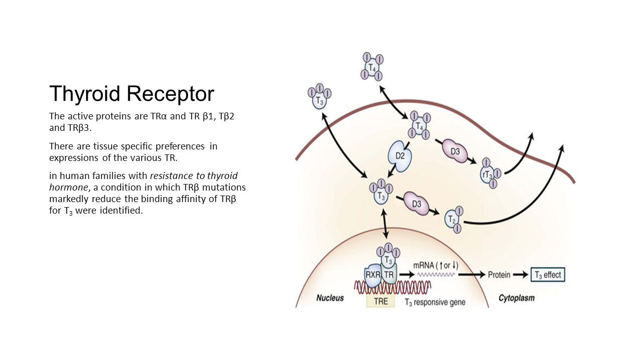 Thyroid Receptor The active proteins are TRα and TR β1, Tβ2 and TRβ3. There are tissue specific preferences in expressions of the various TR. in human