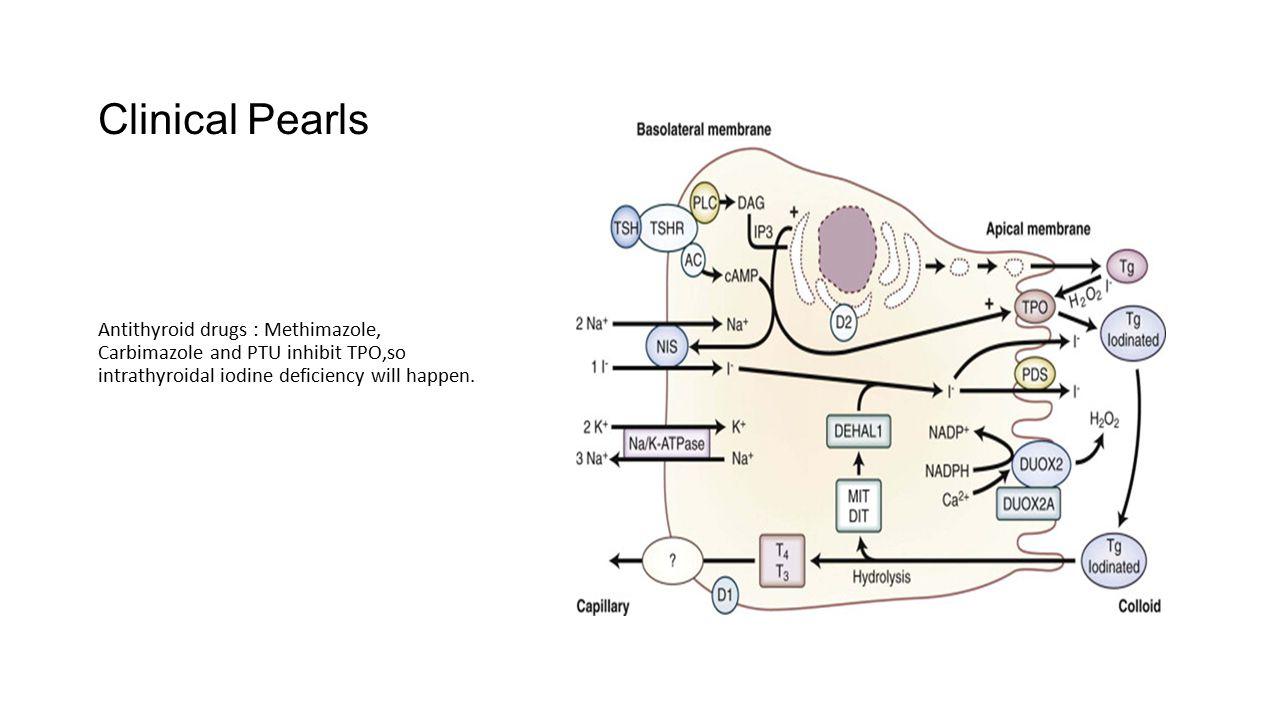 Clinical Pearls Antithyroid drugs : Methimazole, Carbimazole and PTU inhibit TPO,so intrathyroidal iodine deficiency will happen.