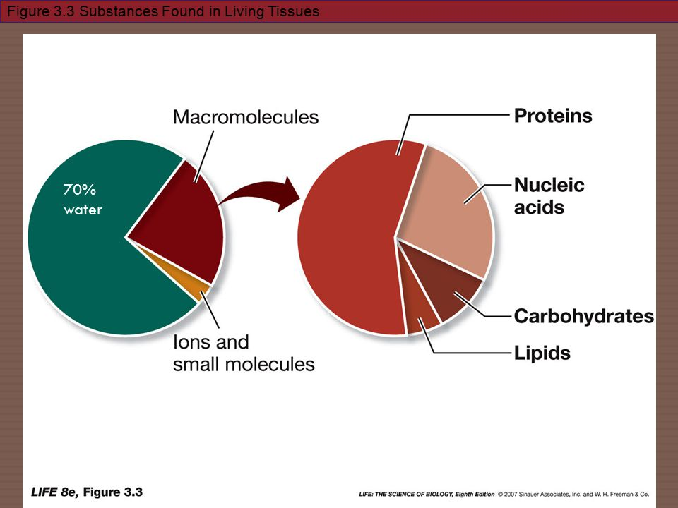Figure 3.3 Substances Found in Living Tissues 70% water