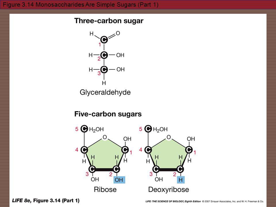 Figure 3.14 Monosaccharides Are Simple Sugars (Part 1)