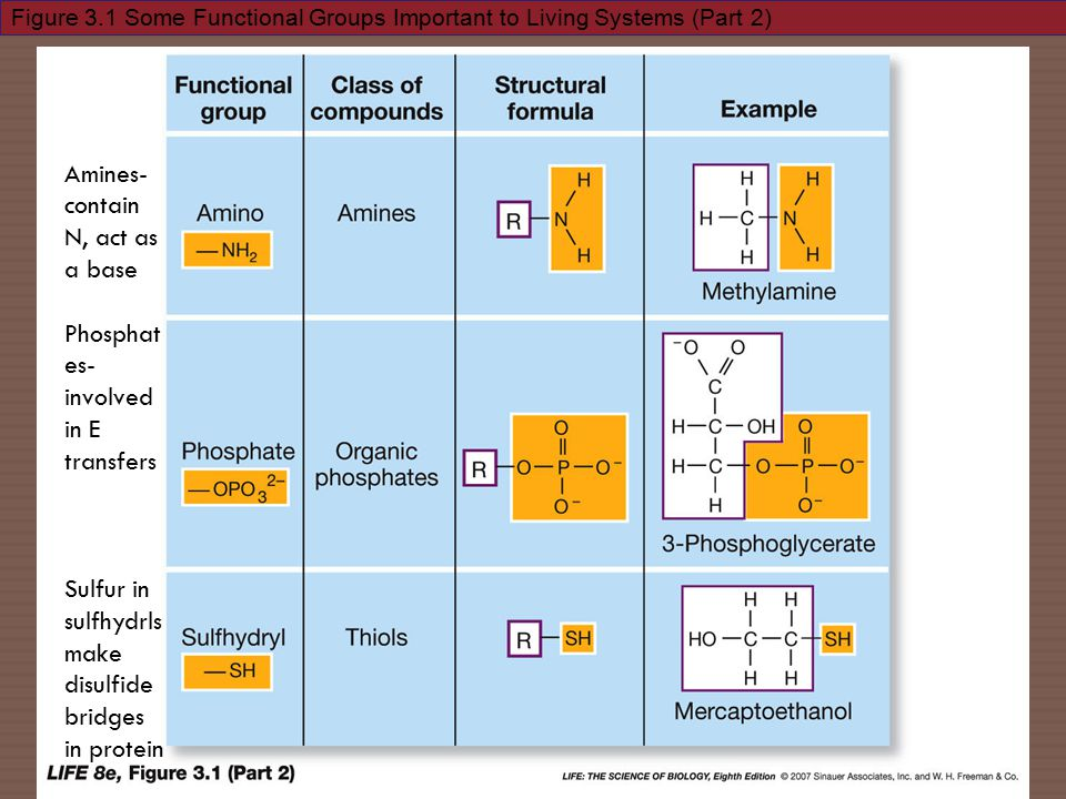Figure 3.1 Some Functional Groups Important to Living Systems (Part 2) Amines- contain N, act as a base Phosphat es- involved in E transfers Sulfur in