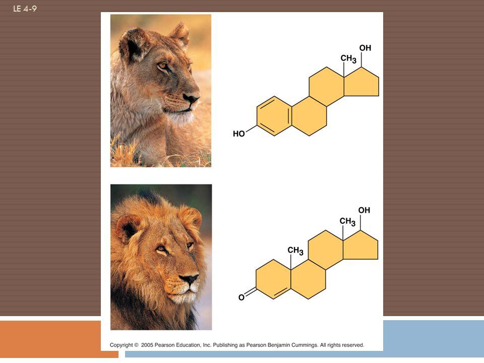 LE 4-9 Estradiol Testosterone Male lion Female lion