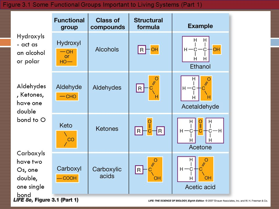 Figure 3.1 Some Functional Groups Important to Living Systems (Part 1) Hydroxyls - act as an alcohol or polar Aldehydes, Ketones, have one double bond