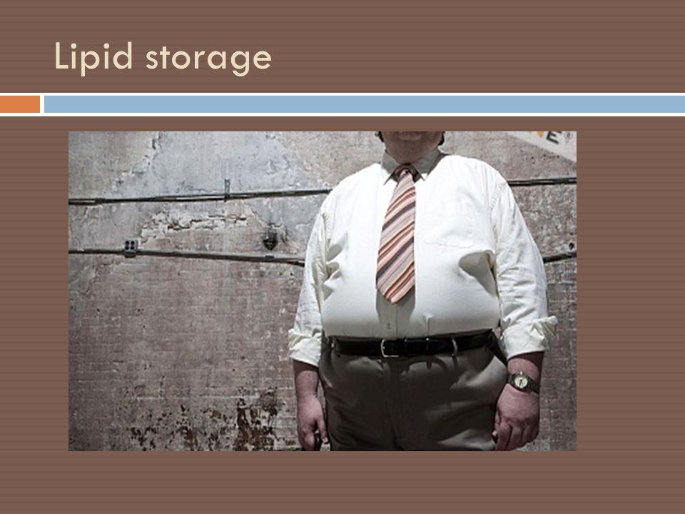 Lipid storage