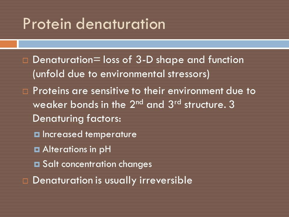 Protein denaturation  Denaturation= loss of 3-D shape and function (unfold due to environmental stressors)  Proteins are sensitive to their environm