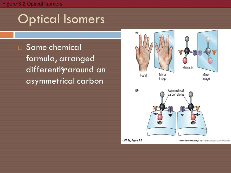 Figure 3.2 Optical Isomers Bio Optical Isomers  Same chemical formula, arranged differently around an asymmetrical carbon