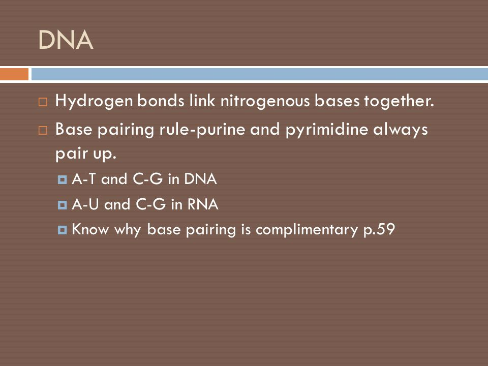 DNA  Hydrogen bonds link nitrogenous bases together.  Base pairing rule-purine and pyrimidine always pair up.  A-T and C-G in DNA  A-U and C-G in