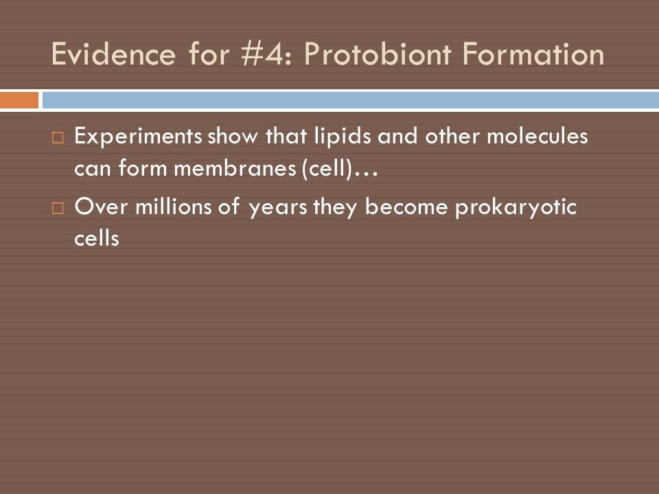 Evidence for #4: Protobiont Formation  Experiments show that lipids and other molecules can form membranes (cell)…  Over millions of years they beco
