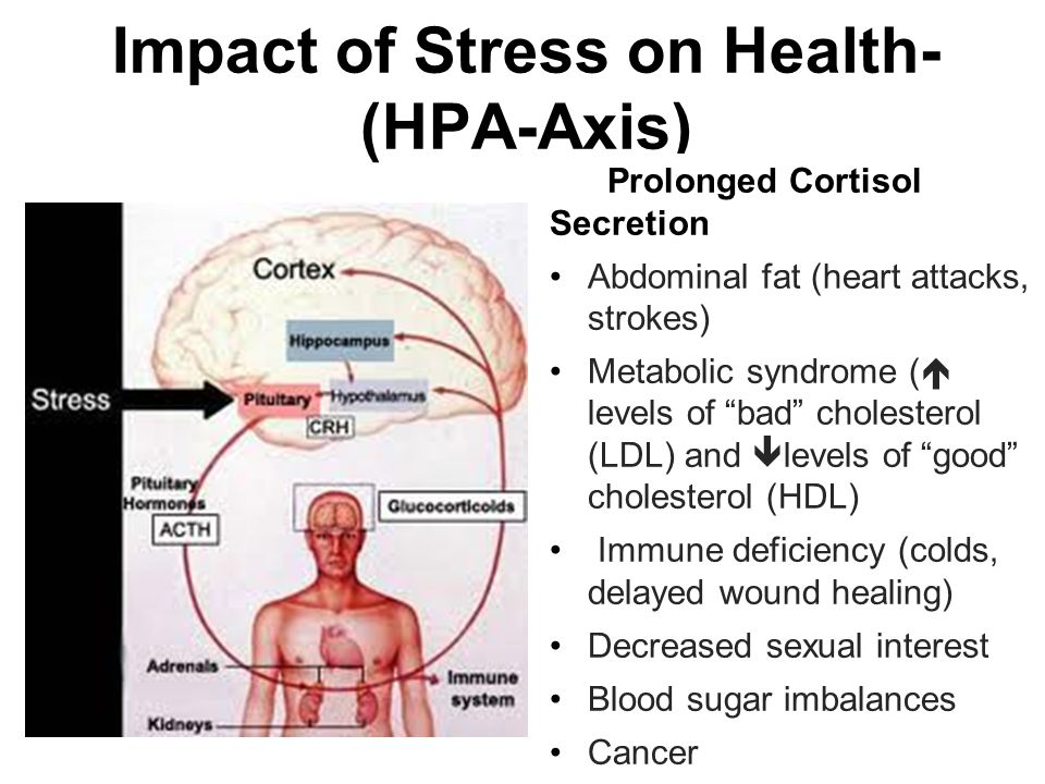 Impact of Stress on Health- (HPA-Axis) Prolonged Cortisol Secretion Abdominal fat (heart attacks, strokes) Metabolic syndrome (  levels of bad cholesterol (LDL) and  levels of good cholesterol (HDL) Immune deficiency (colds, delayed wound healing) Decreased sexual interest Blood sugar imbalances Cancer