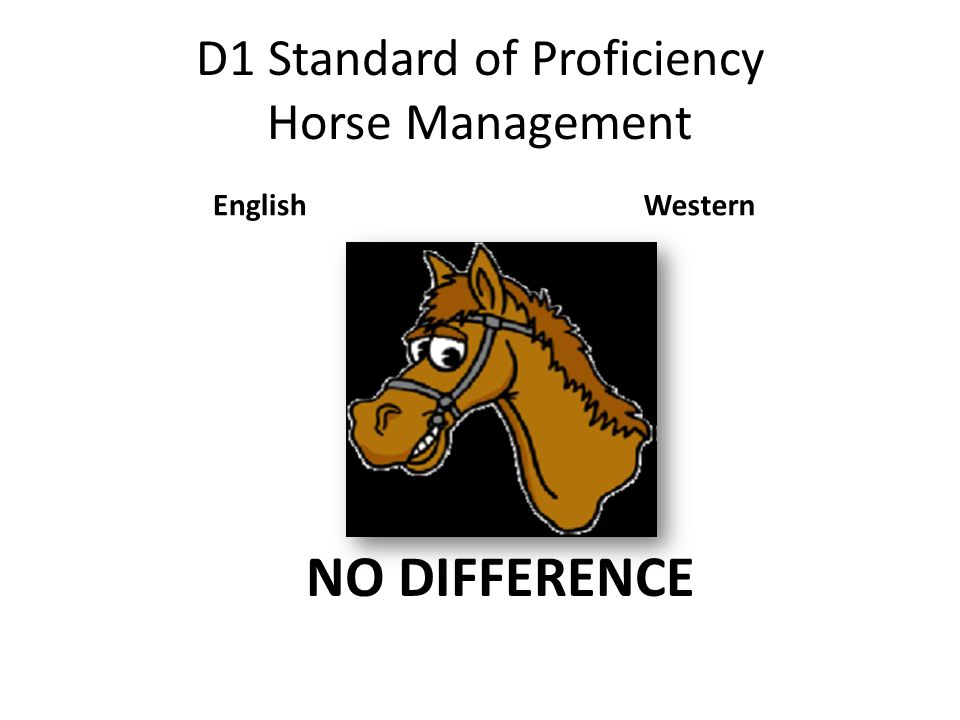 D1 Standard of Proficiency Horse Management EnglishWestern NO DIFFERENCE