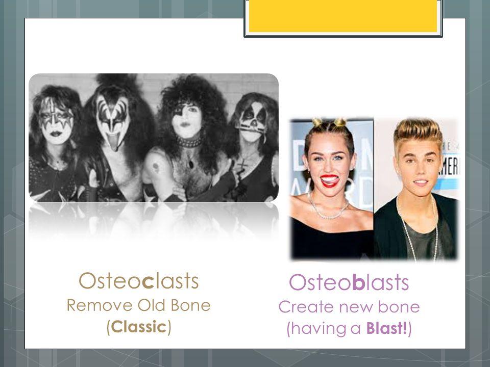 Osteo c lasts Remove Old Bone ( Classic ) Osteo b lasts Create new bone (having a Blast! )