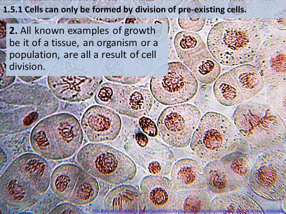2. All known examples of growth be it of a tissue, an organism or a population, are all a result of cell division. http://upload.wikimedia.org/wikiped