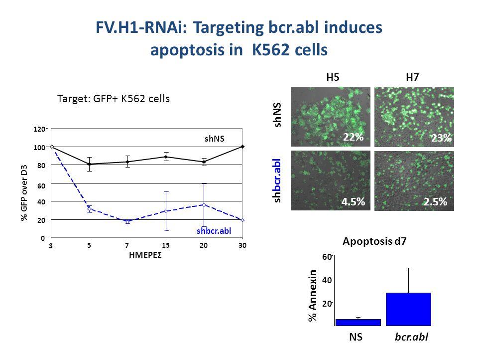 Η5Η5 shNS shbcr.abl 22% 4.5% Η7Η7 23% 2.5% 20 40 60 % Annexin Apoptosis d7 NSbcr.abl FV.H1-RNAi: Targeting bcr.abl induces apoptosis in Κ562 cells Target: GFP+ K562 cells