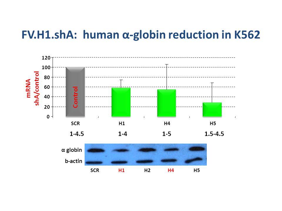 H1SCRH2H4H5 α globin b-actin FV.Η1.shA: human α-globin reduction in Κ562 1-4.51-41-51.5-4.5 0 20 40 60 80 100 120 SCRH1H4H5 mRNA shA/control Control