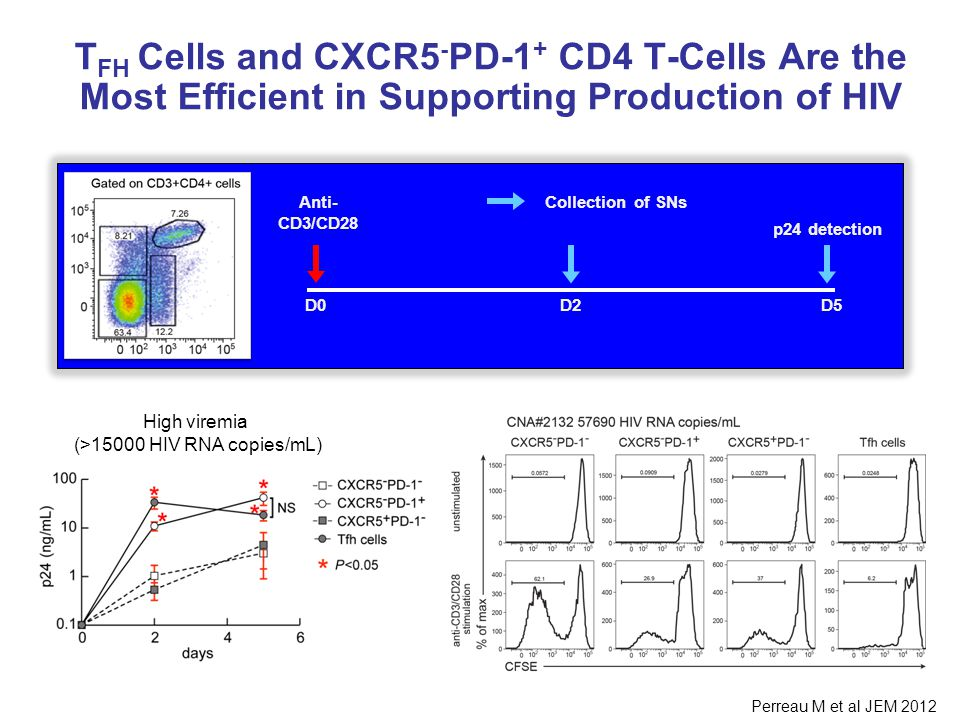 T FH Cells and CXCR5 - PD-1 + CD4 T-Cells Are the Most Efficient in Supporting Production of HIV p24 detection D5D0 Anti- CD3/CD28 Collection of SNs D2 High viremia (>15000 HIV RNA copies/mL) Perreau M et al JEM 2012