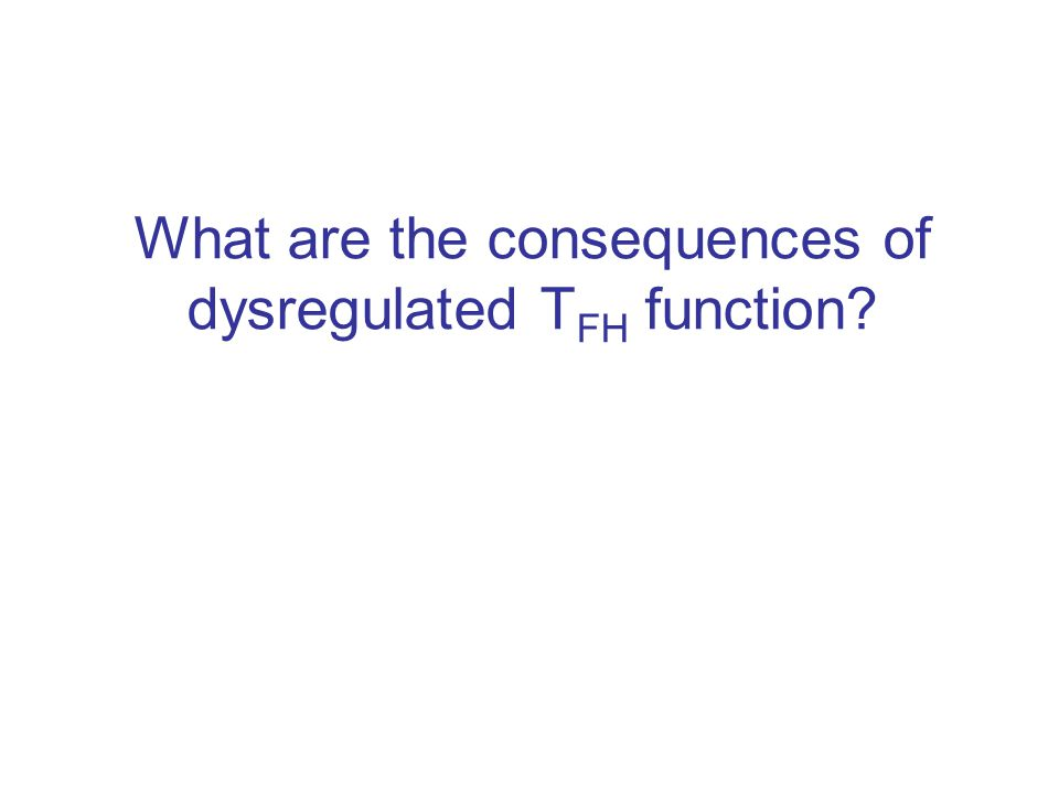 What are the consequences of dysregulated T FH function?