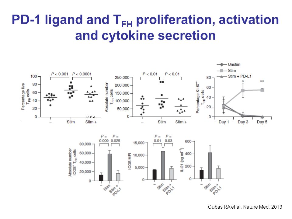 PD-1 ligand and T FH proliferation, activation and cytokine secretion PD1-L Cubas RA et al. Nature Med. 2013