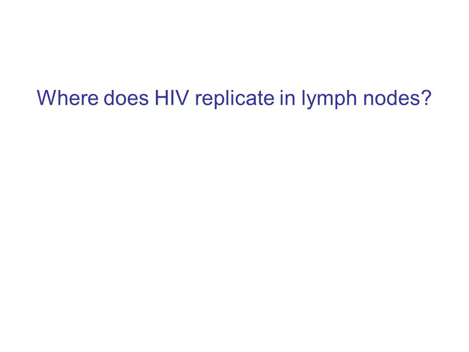 Where does HIV replicate in lymph nodes?