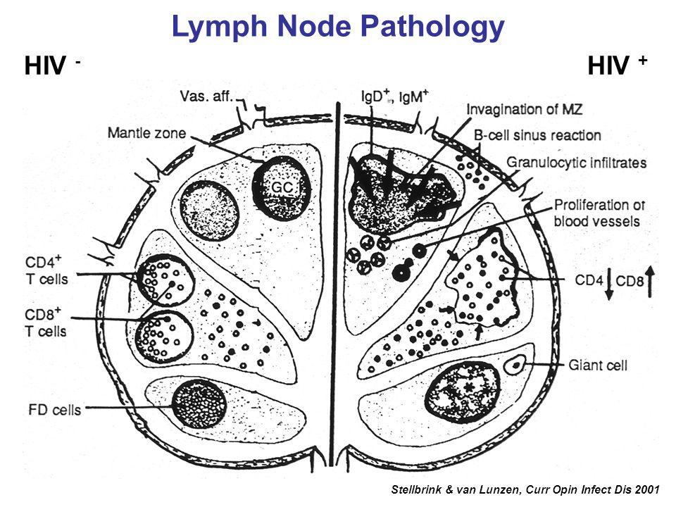 Lymph Node Pathology HIV - HIV + Stellbrink & van Lunzen, Curr Opin Infect Dis 2001