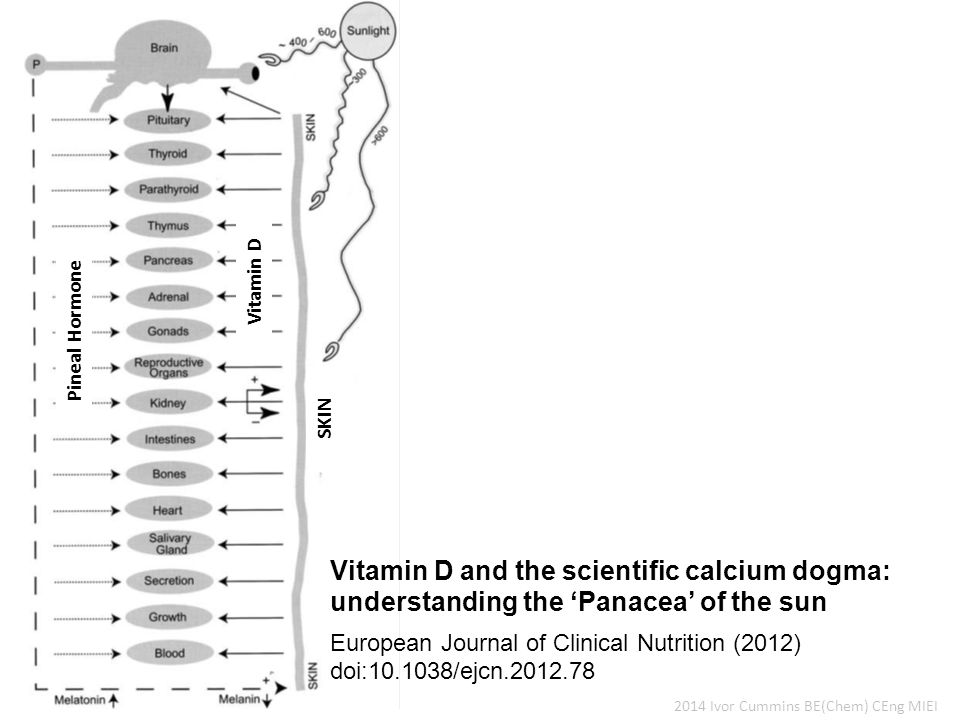 2014 Ivor Cummins BE(Chem) CEng MIEI European Journal of Clinical Nutrition (2012) doi:10.1038/ejcn.2012.78 Vitamin D and the scientific calcium dogma: understanding the 'Panacea' of the sun Pineal Hormone Vitamin D SKIN