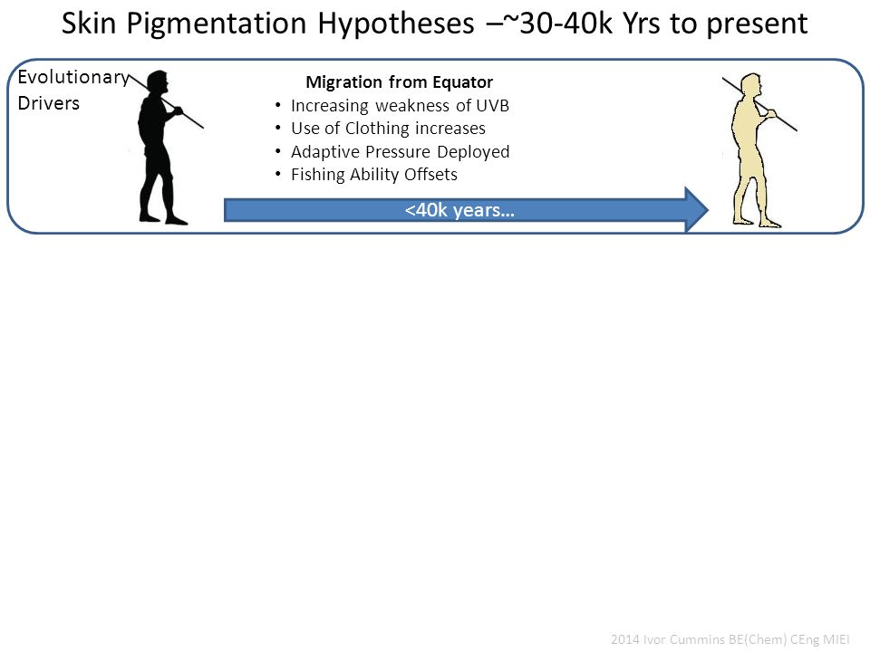 Skin Pigmentation Hypotheses –~30-40k Yrs to present Evolutionary Drivers 2014 Ivor Cummins BE(Chem) CEng MIEI Migration from Equator Increasing weakness of UVB Use of Clothing increases Adaptive Pressure Deployed Fishing Ability Offsets <40k years…