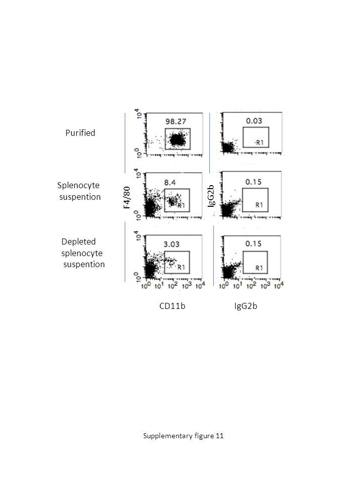 F4/80 CD11bIgG2b Purified Splenocyte suspention Depleted splenocyte suspention Supplementary figure 11