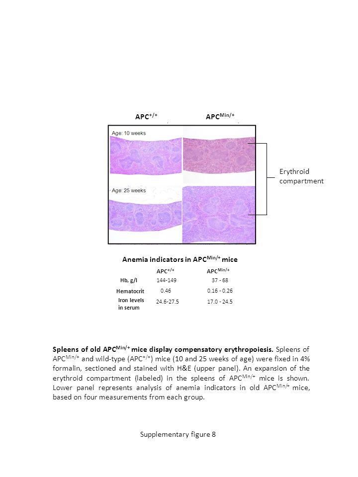 Spleens of old APC Min/+ mice display compensatory erythropoiesis.