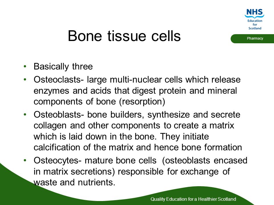 Quality Education for a Healthier Scotland Pharmacy Bone tissue cells Basically three Osteoclasts- large multi-nuclear cells which release enzymes and