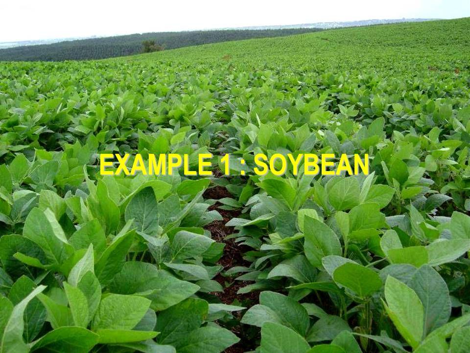 EXAMPLE 1 : SOYBEAN