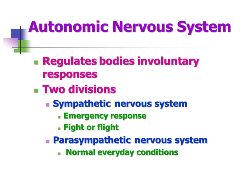 Autonomic Nervous System Regulates bodies involuntary responses Regulates bodies involuntary responses Two divisions Two divisions Sympathetic nervous