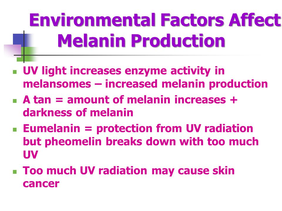 Environmental Factors Affect Melanin Production UV light increases enzyme activity in melansomes – increased melanin production A tan = amount of mela