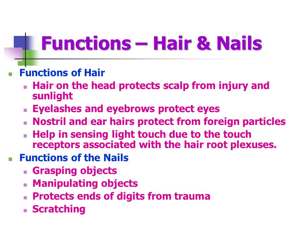 Functions – Hair & Nails Functions of Hair Hair on the head protects scalp from injury and sunlight Eyelashes and eyebrows protect eyes Nostril and ea