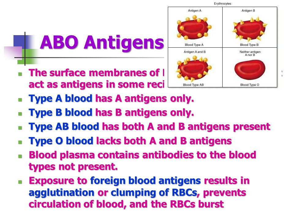ABO Antigens The surface membranes of RBCs carry proteins that act as antigens in some recipients The surface membranes of RBCs carry proteins that ac