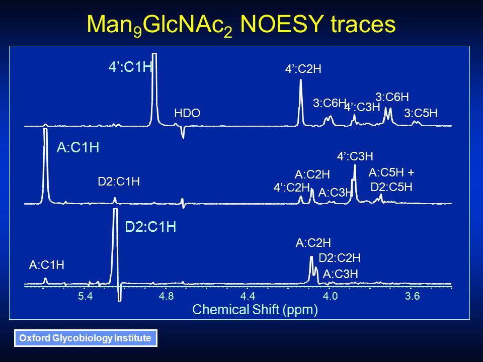 Oxford Glycobiology Institute Man 9 GlcNAc 2 NOESY traces Chemical Shift (ppm) 5.44.84.44.03.6 HDO 4':C1H A:C1H D2:C1H A:C2H A:C1H D2:C2H A:C3H 4':C2H 3:C6H 4':C3H 3:C6H 3:C5H 4':C2H A:C2H A:C3H 4':C3H A:C5H + D2:C5H