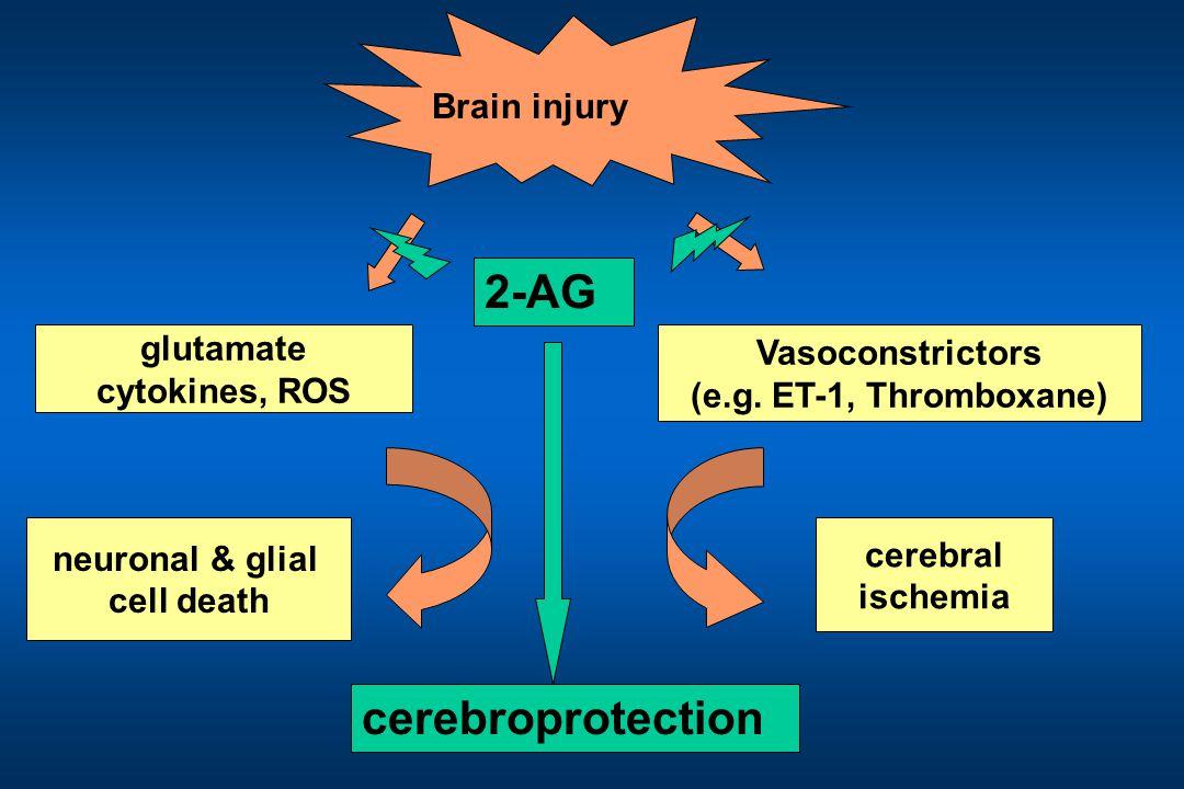 glutamate cytokines, ROS cerebral ischemia neuronal & glial cell death Brain injury Vasoconstrictors (e.g.