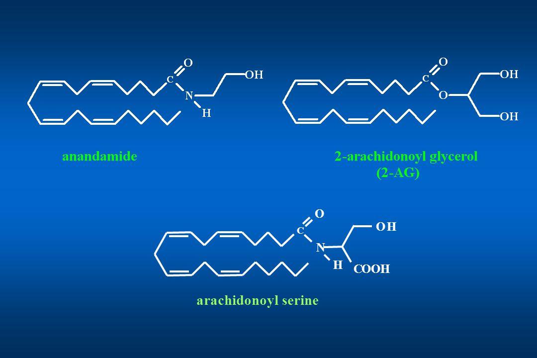 HO COOH N O C H arachidonoyl serine
