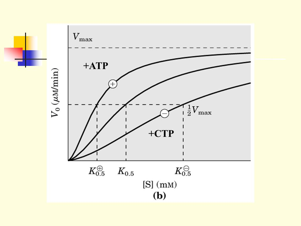 +ATP +CTP